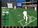 Cricket Craziness